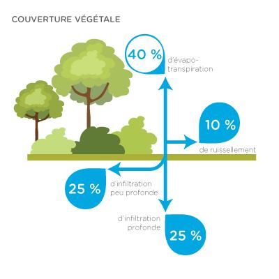 Infographic - couverture végétale : 40 % d'évapo-transpiration ; 10 % de ruissellement ; 25 % d'infiltration peu profonde ; 25 % d'infiltration profonde
