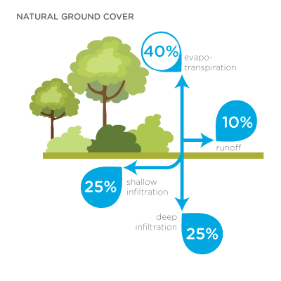 Infographic - Hydrology with natural ground cover: 40% evaporation; 10% runoff; 25% deep infiltration; 25% shallow infiltration