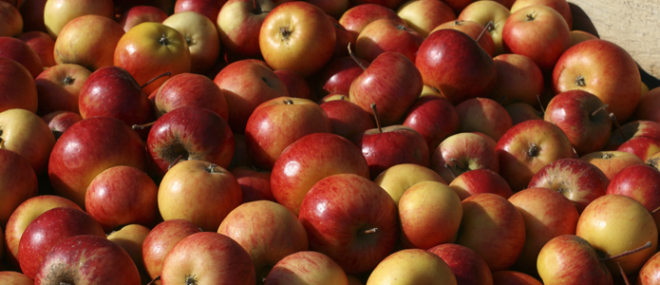 A large crate full of apples