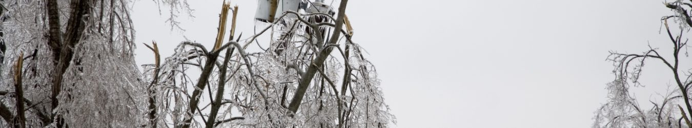 icy trees and power lines.