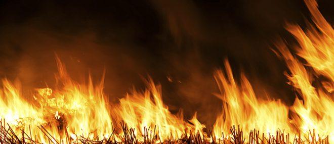 wildfire in a field.